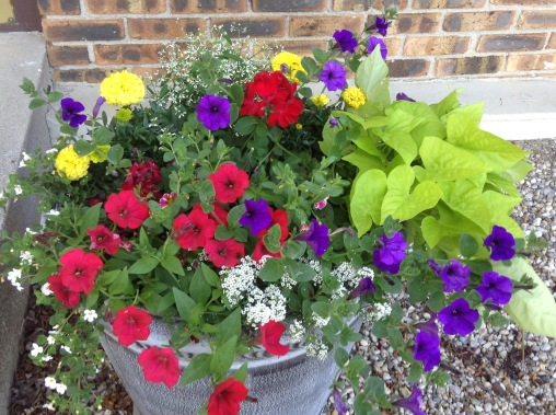 A single pot can hold a wide variety of plants!